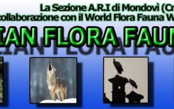 2° Contest Speed IFFA